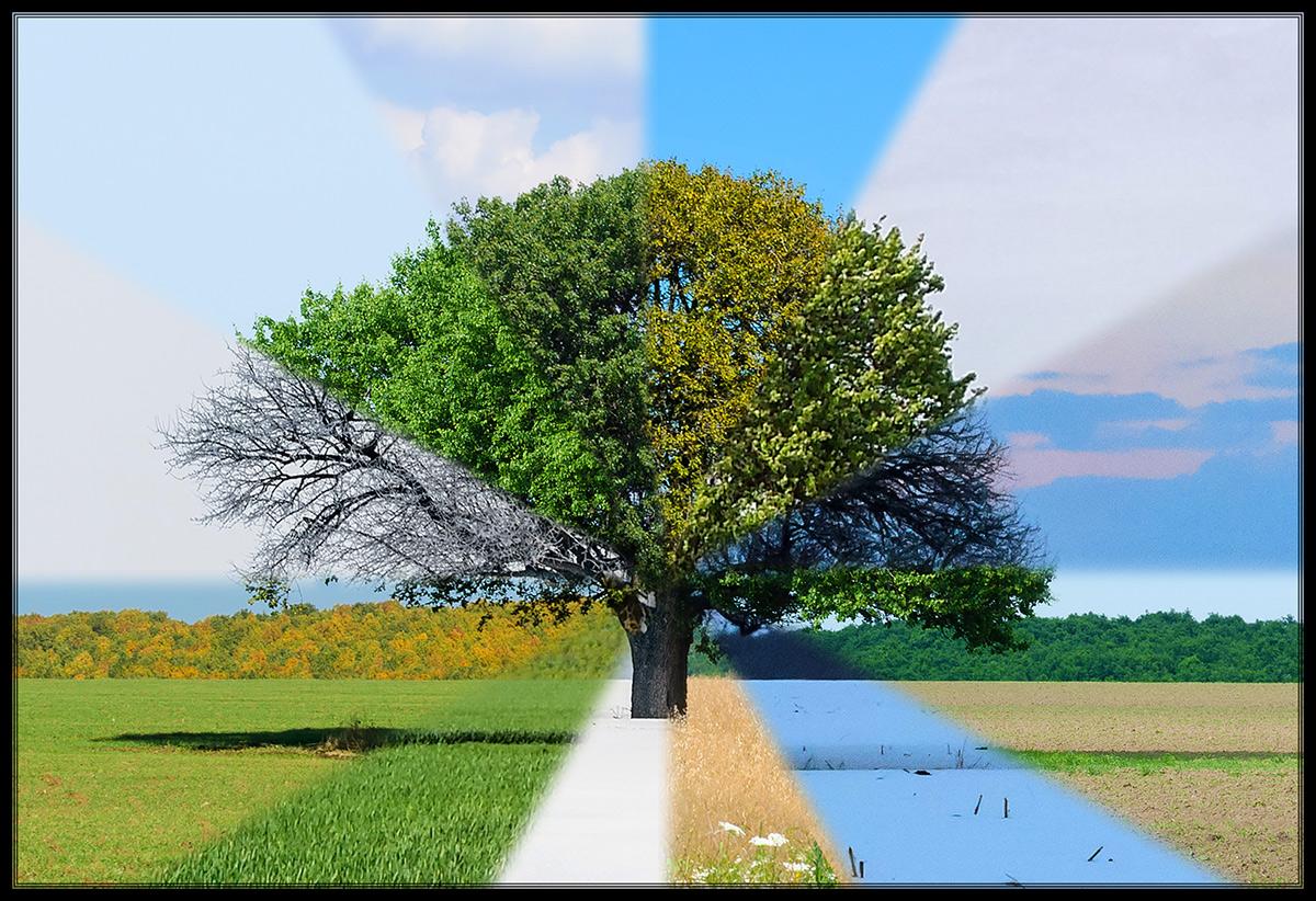 Lunca-Corbului---Copacul-4