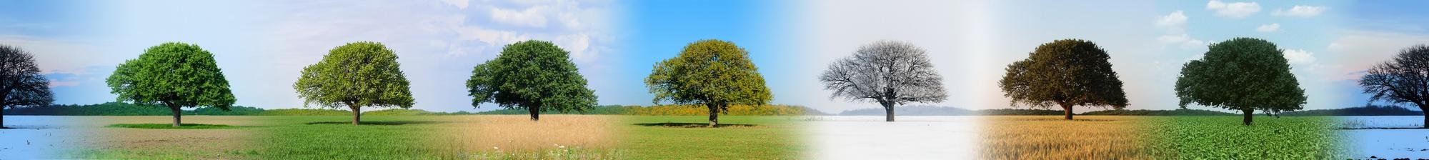 Lunca Corbului - Copacul_3